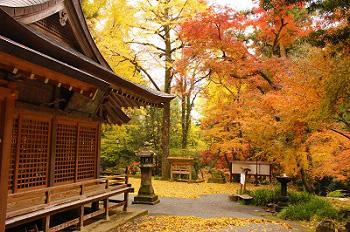 美奈宜神社の紅葉の様子-1